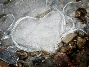 A Heart Hardened and Cold