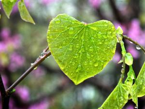 Vessels Ministry Heart Leaf Rain